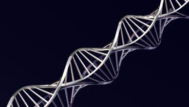 Fili del DNA